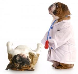 Mascotas Cuponatic